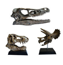 3 PCS !  Dinosaur Skull  Small Model  / T-Rex / Triceratops / Velociraptor model
