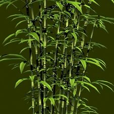 BAMBOO TREE 40 SEEDS (GROWABLE AND CROPABLE)