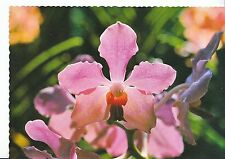 Flower Postcard - Orchid - Vanda Hybrid - Common Sight in Singapore   AB2401