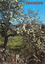 BG27667 islas canarias almendro en flor   spain
