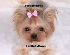 10x Pet Yorkie Puppy grooming bows with Alligator clips Maltese Biewer dog hair