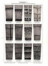 1894 Lumber, Wood Structures, Pine, Oak, Beech Agriculture Antique Print
