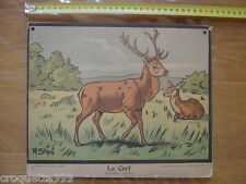 Circa 1920 Planche scolaire PERROT STAUB NATHAN le cerf ruminant 20's