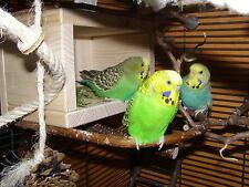 Vogelhäuschen u. Schlafhaus mit Naturholz-Anflugring