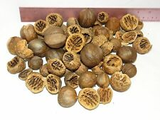 1lb REAL HICKORY NUTS FOR CRAFTS NATURAL WOOD CHRISTMAS HOLIDAY DECORATION