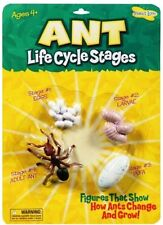 Ant Life Cycle Stages Grow Insect Lore Toy Larvae Models Egg Pupa Age 4+