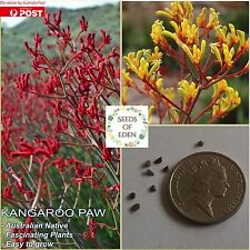 "40 KANGAROO PAW ""Mixed Colour"" Seeds(Anigozanthos flavidus); Native Plant"
