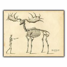 METAL SIGN WALL PLAQUE - GIANT FOSSIL ELK Vintage reprint Anatomy Skeleton
