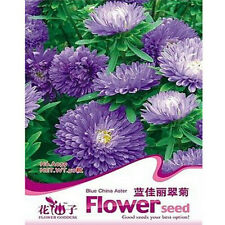 FD2056 Blue China Aster Seed Callistephus Beautiful Flower /1 Pack 30 Seeds
