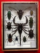 10 INSECTS DISPLAY JEWEL STAG BEETLE SPIDER TAXIDERMY INSECT BUG ENTOMOLOGY