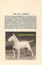 1931 The  Bull Terrier DOG With  Breed desc. Vintage PHOTO Art Print