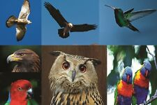 1000 high resolution quality bird images for large format printer business  sale