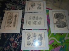 Lot of boehringer ingelheim pharmaceuticals neurological prints full set of 5