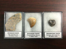 Fossil Collection - Mosasaur Tooth, Triceratops, Jurassic Dinosaur Bone ...