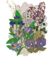 Real pressed flowers, lobelia pansy alyssum shamrock borage, forget me not