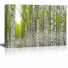 "Canvas Prints Wall Art - Birch Trees with Fresh Green Leaves in Spring-12"" x 18"""
