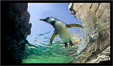 Penguin Swimming And Ocean Color Wall Sticker Mural Print 30x18