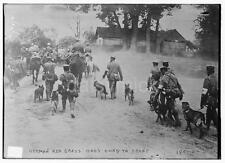 German Army Red Cross Dogs Going To The Front World War 1 7x5 Inch Reprint Photo