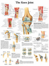 A3 Medical Poster – The Knee Joint (Text Book Anatomy Picture Pathology GP)