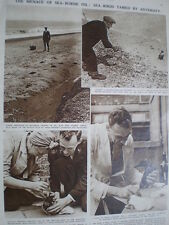 Photo article 1000s of sea birds hit by oil Aldeburgh - Felixstowe coast 1946