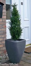 Best Artificial 90cm 3ft Topiary Cedar Tree alt Buxus Boxwood Grass Ball Bay New