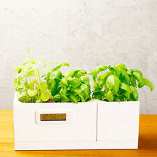 Creative Modular Battery-free Clock Square White Pots on a Tray for Small Plants