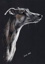 WHIPPET  *   WINDHUND  ***    *   A4  Limited  Print   #132