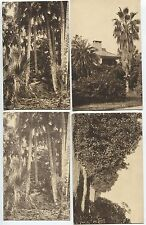 4 early  Seaboard Airline Railway Florida Postcards Brooksville Bradentown