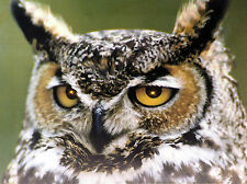 Brown Tawny Owl LED Light Up Eyes Canvas Wall Picture - Battery Operated