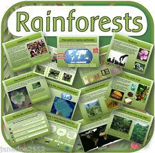 KS2 geografia argomento la foresta pluviale GIUNGLA primario IWB risorse di insegnamento su CD