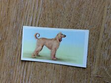 Vintage PRIORY TEA Trading Swap Card - I-SPY DOGS - No 18 1957 t2-1