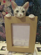 SILVER TABBY CAT ~ PICTURE FRAME    16-9