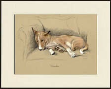 BASENJI LOVELY DOG ART PRINT MOUNTED READY TO FRAME