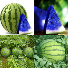 10Pcs New Variety Plant Blue Watermelon Seeds Vegetable Organic Home Garden