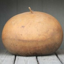 Gourd Bushel Vegetable Seeds (Lagenaria siceraria) 10+Seeds