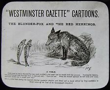 Glass Magic Lantern Slide BLUNDER - FOX & RED HERRINGS C1900 POLITICAL CARTOON