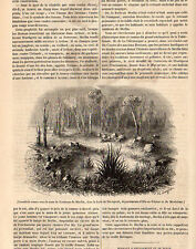 56 TOMBEAU MERLIN GRAVE CROMLECH FORET DE PAIMPONT PRESS ARTICLE 1846 CLIPPING