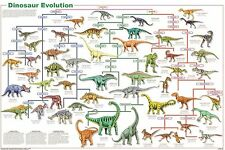 (LAMINATED) DINOSAUR SPECIES EVOLUTION POSTER (61x91cm) EDUCATIONAL WALL CHART