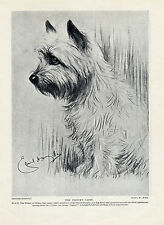 CAIRN TERRIER PRINCE OF WALES DOG LOVELY ORIGINAL DOG PRINT PAGE FROM 1934