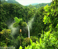 NATURAL SOUNDS MUSIC OF THE RAINFOREST CD, RELAXATION