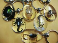 10 keychain Real insect mix style scorpion green beetle spider crab clear