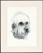 DANDIE DINMONT TERRIER OLD DOG HEAD STUDY PRINT FROM 1935 MOUNTED READY TO FRAME