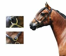 Quality Eng Leather InHand Show Bridle Welsh Pony Cob Mountain&Moorland Stallion