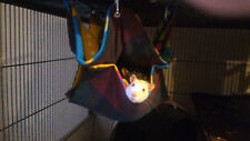 Cute cheap hanging 2 layer honeycomb hammocks for pet rats mice ferrets etc