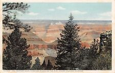 GRAND CANYON AZ THE CANYON SEEN THROUGH PINES ON THE RIM PHOSTINT POSTCARD 1910s