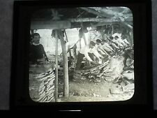 VINTAGE COLLECTIBLE GLASS PICTURE NEGATIVE Scraping Oak Bark Almoraima Spain