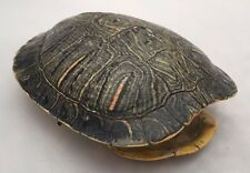 Real Turtle Shell - Red Eared Slider 4 - 5 inch