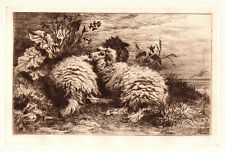 "Amazing Thomas George Cooper Original 1800s Nature Etching ""Cuddling Sheep"" COA"