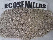 Lechuga romana larga, más de 600 semillas ECOLOGICAS Compra 2 envío 3