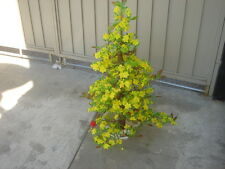 "plastic artificial yellow apricot flower tree with pot 40"" tall (hoa mai)"